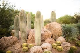 the desert botanical garden why you should visit