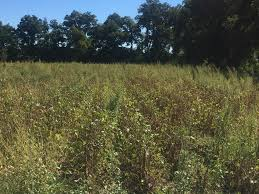 Managing Ppo Resistant Palmer Amaranth In Mississippi Soybean