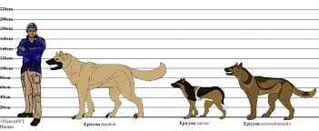 Dire Wolf Size Chart 39 Expository Dire Wolf Size Chart