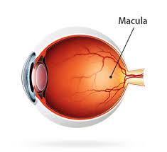 macular pucker macular holes