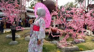 Bunga Sakura Melihat Bunga Sakura Yang Mekar Di Blitar