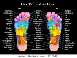 Free Foot And Hand Reflexology Chart Reflexology Charts Free Sada Margarethaydon Com