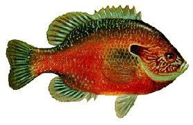 Sardis Lake Mississippi Us Fish Identification Chart
