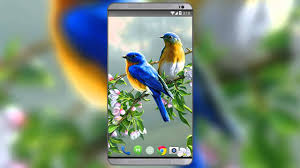 lovebirds live wallpaper