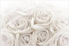 Bilderwelten Weiße Rosen 216 X 144 Cm Dekofolie Galaxus