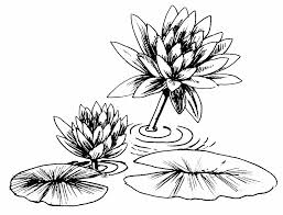 Small Picture Lily Pad Coloring Page Simple With Photos Of Lily Pad 66 9984
