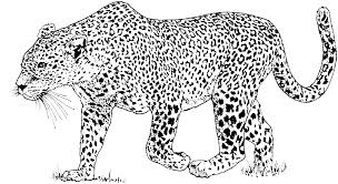 Adult Snow Leopard Coloring Pages Snow Leopard Coloring Pages For