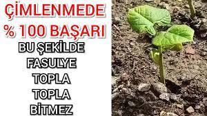 Fasulye Ekme Zamanı - YouTube