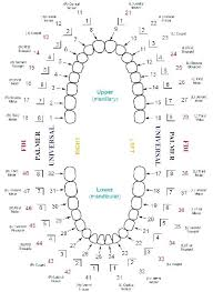 Teeth Chart Template