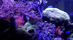 The Aquatic Design Centre Marine Reef Aquarium Maintained By The Aquatic Design Centre Ltd London
