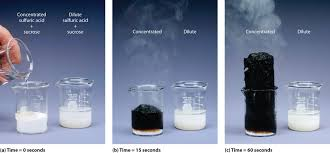 mixing sucrose with dilute sulfuric acid in a beaker a right produces a simple solution mixing the same amount of sucrose with concentrated sulfuric