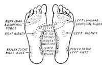 Foot Chart Origin Foot Chart Origin Muscle Origin And Insertion