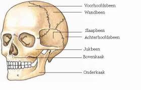 Beenderen van de schedel
