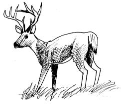 Dessin Colorier Imprimer Cerf Volant