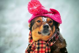 Keep Dogs Safe in Winter: Common Cold Weather Hazards