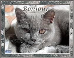 """Résultat de recherche d'images pour """"gif animé chat bisous"""""""