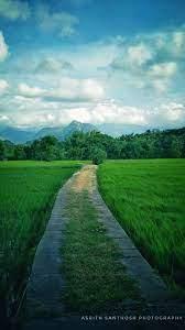 Kerala, Paddy Fields...