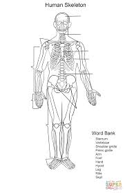 Small Picture Human Skeleton Worksheet coloring page Free Printable Coloring Pages