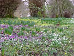 garden design flowers bulbs spring woodlands ireland irish wicklow