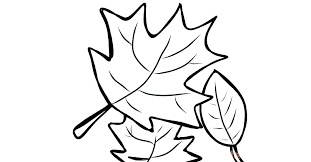 maple leaf coloring sheet fall leaves pages page canadian
