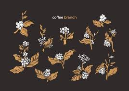 Planting a coffee bean is actually a seed. Premium Vector Coffee Vector Illustration Cartoon Flat Coffee Cup Aroma Beverage Paper Bag Package Coffee Beans Harvest Natural Ingredient Plants And Nature Plantation