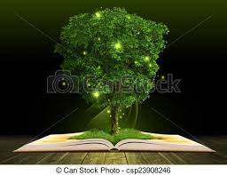 grown tree in open book on dark wooden planks csp23908246