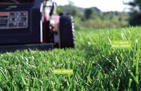 Image For Lawns How To Get Rid Of Weeds In Lawn 6 Tactics The Family