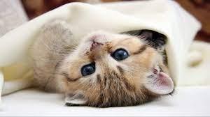 Cute Cat Kitten Hd Wallpaper Images ...