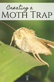 Moth Light Traps Amazon Creating A Homemade Moth Trap Diy Moth Trap Little House