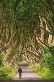 Resultado de imagem para IMAGENS DE COMIDAS DA IRLANDA