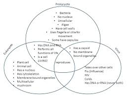 Venn Diagram Plants Cell Organelles Animal Vs Plant Cell Venn Diagram Michaelhannan Co