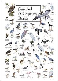 Sanibel Captiva Birds Bird Identification Charts