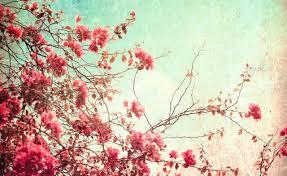 Free Floral Backgrounds Free Download Vintage Floral Backgrounds Wallpaper Wiki