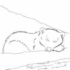 Small Picture Polar Polar Bear Coloring Page Bear Mother With Two Cubs Coloring