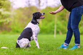 How To Teach Your Dog Hand Signals Training Tips From A Pro