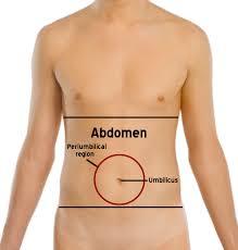 Stomach Muscle Chart Abdomen Wikipedia