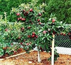 Yes You Can Easily Grow Fruit Trees In Michigan  Michigan What Fruit Trees Grow In Michigan