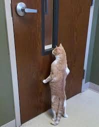 Wir Lieben Lustige Katzen Startseite Facebook