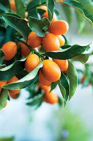 Southern California Fruit Trees