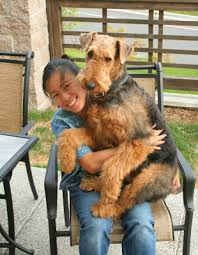 Airedale Weight Chart Kimi The Airedale Terror The Chronicles My Growth Photos