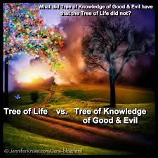 Image result for tree of knowledge tree of life