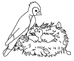 Bird S Nest Coloring Page To Print Or Download For Free Adult