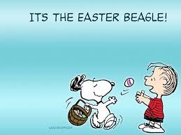 Τι είναι το  Beagle στις ΗΠΑ;