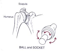ball and socket joint. hip, ball-and-socket ball and socket joint