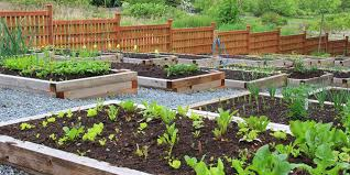 vegetables require more soil to grow as their roots need to expand much her in order to take in all the required nutrition from the soil
