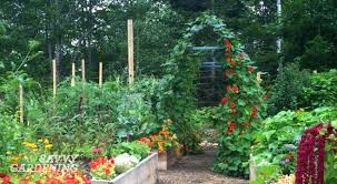 vertical vegetable gardening pole bean
