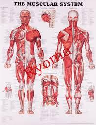 Vintage ยา Human Anatomy โปสเตอรกระดาษคราฟทภาพวาดสตกเกอรตดผนงพมพโรงพยาบาลหองเรยนตกแตงภายใน