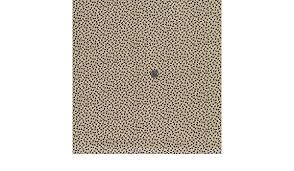 Amazon.com: Andover Fabrics Cotton Savannah Jo Morton Leaves Seeds Stems  Cotton Fabric Print by The Yard A-7166-NL