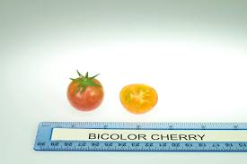Tomato Color Chart Tomato Varieties Rutgers Njaes