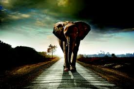 top ways to save wildlife shareamerica elephant walking on a road carlos caetano shutterstock com